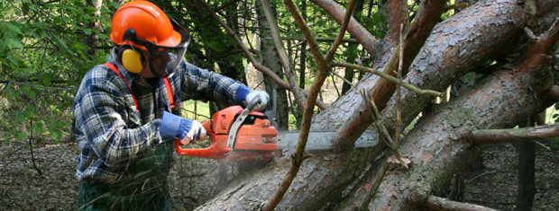 Tree Service, Bedford, MA